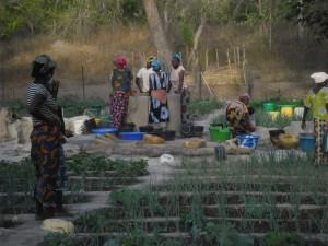 Mujeres guinenses trabajando en la huertas que Aprodel apoya./ Aua Keita